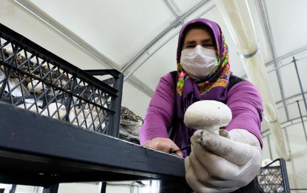 kaynana, tarımın yapılamadığı Orta Toroslar'da mantar üretiyor