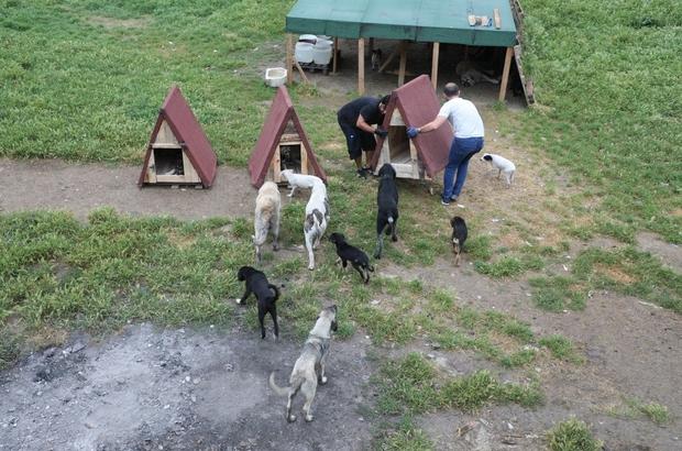 Sokak hayvanları için kulübe çalışması